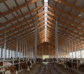 Modernizace farmy skotu